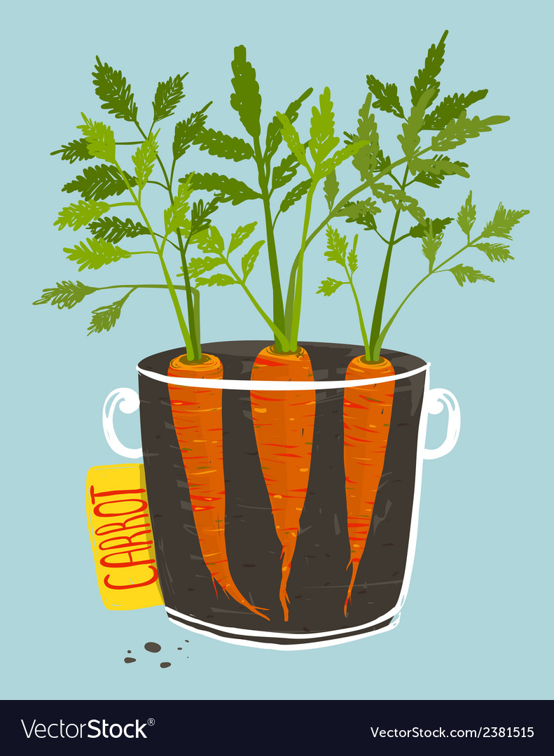 Growing carrots with green leafy top in mug vector | Price: 1 Credit (USD $1)