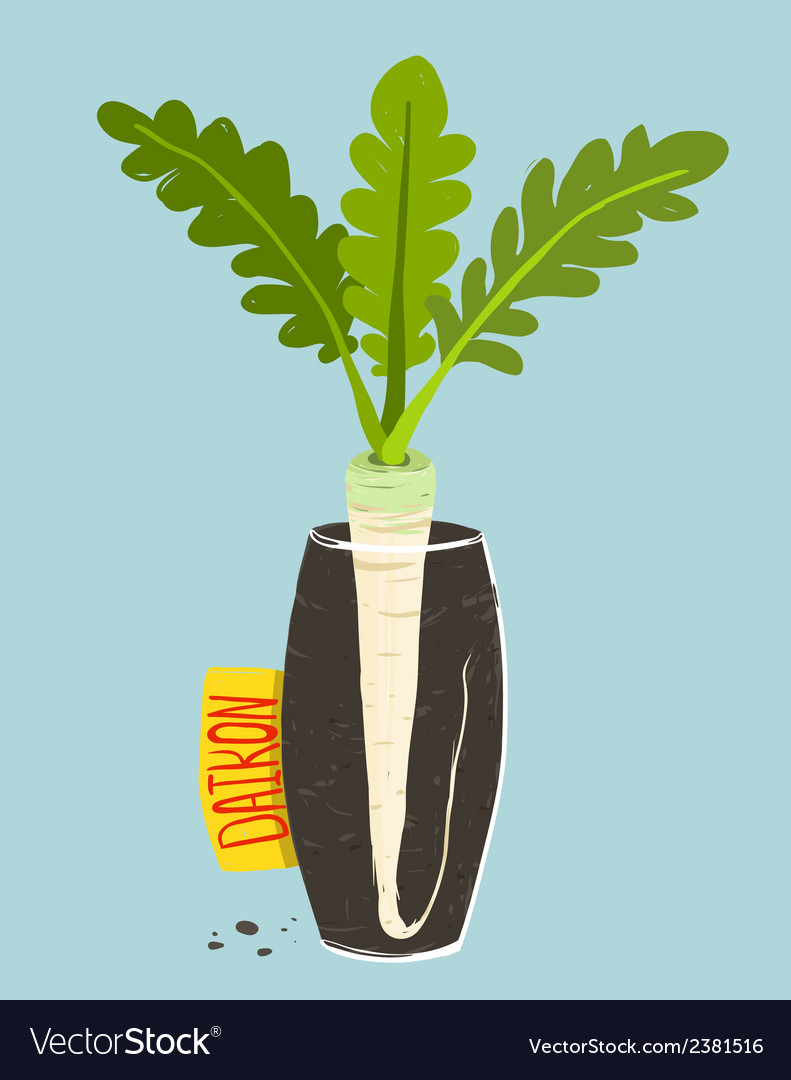 Growing daikon radish with green leafy top in vase vector | Price: 1 Credit (USD $1)