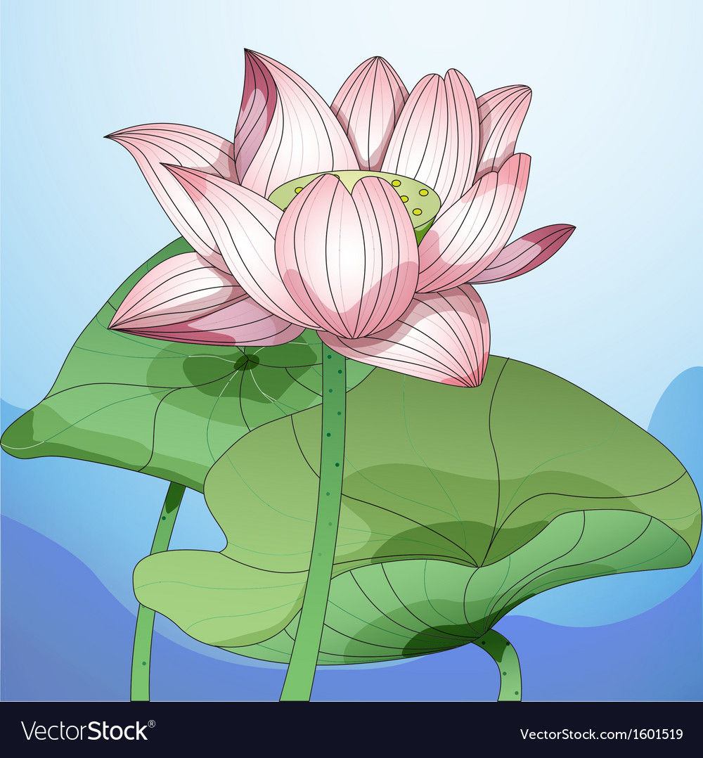 Lotus1 vector | Price: 1 Credit (USD $1)
