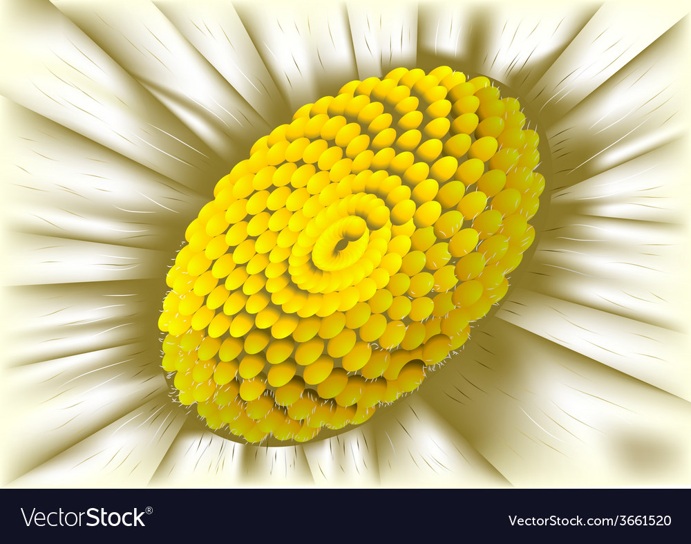 Center of flower vector | Price: 1 Credit (USD $1)