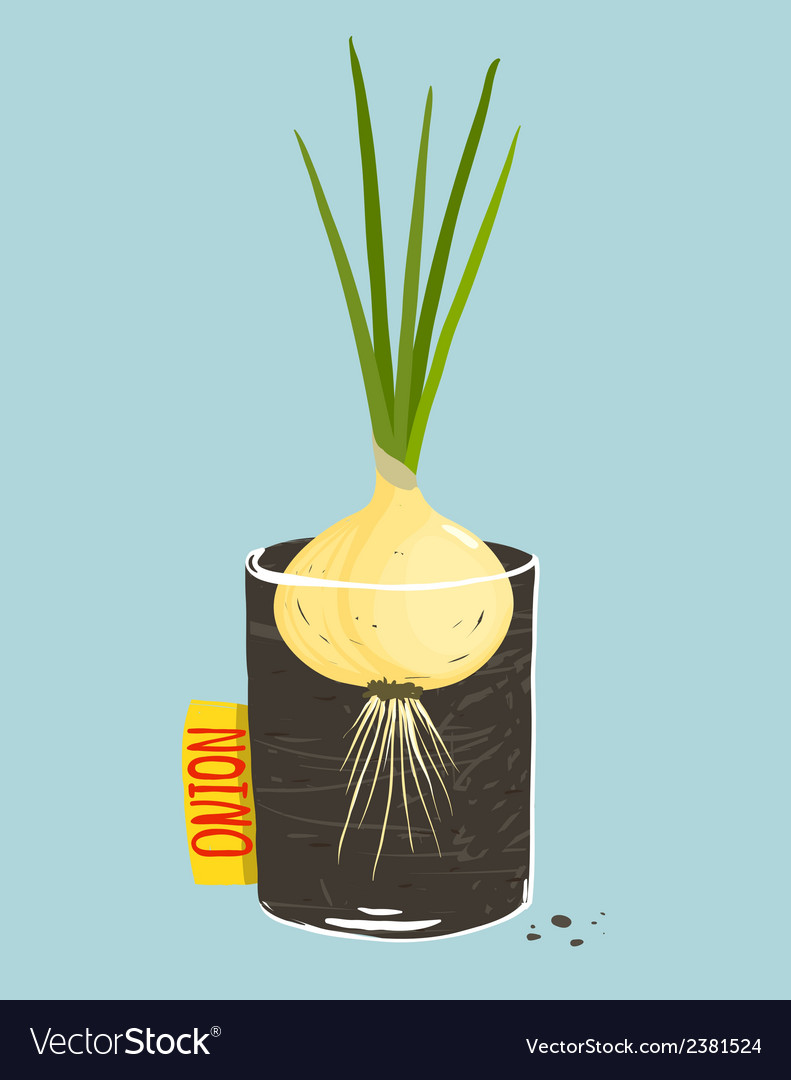 Growing onion with green leafy top in container vector | Price: 1 Credit (USD $1)