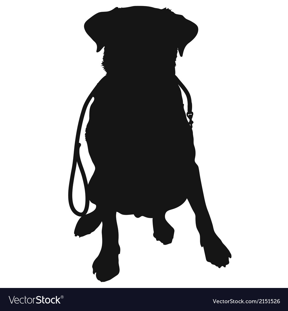 Labrador retriever leash silhouette vector | Price: 1 Credit (USD $1)