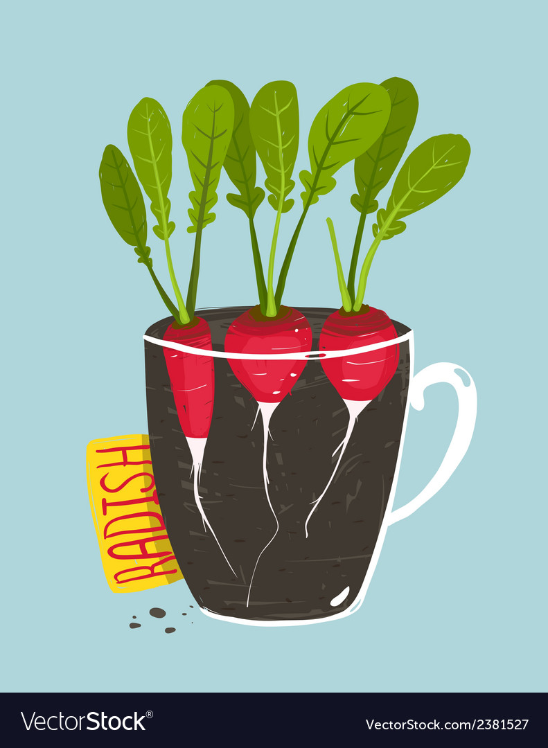 Growing radish with green leafy top in pot vector | Price: 1 Credit (USD $1)