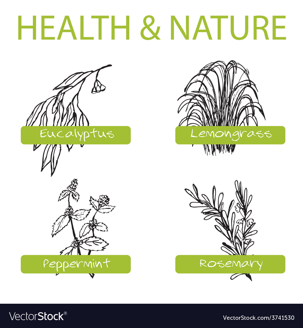 Handdrawn set - health and nature collection of vector   Price: 1 Credit (USD $1)
