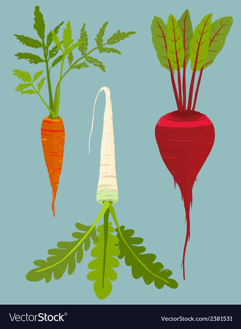 Growing root vegetables set with green leafy top vector | Price: 1 Credit (USD $1)