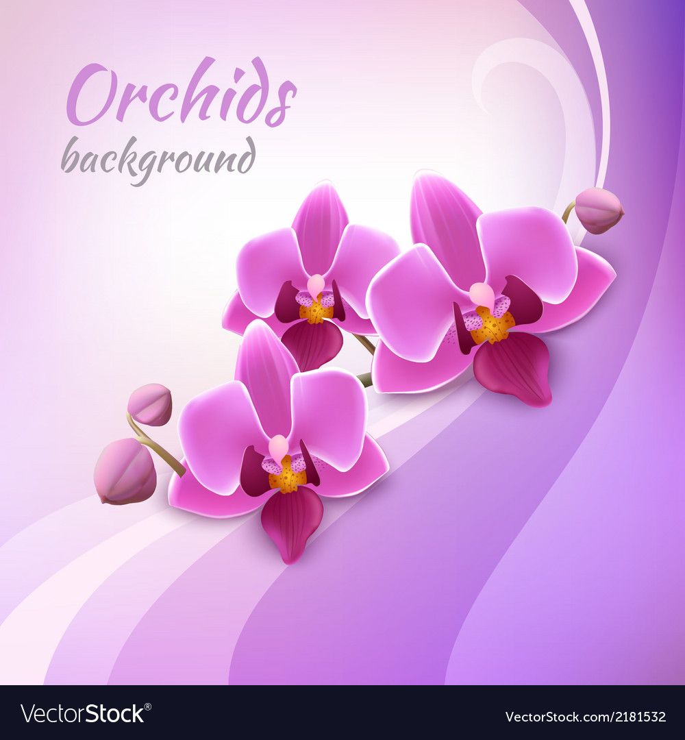 Orchid background template vector | Price: 1 Credit (USD $1)