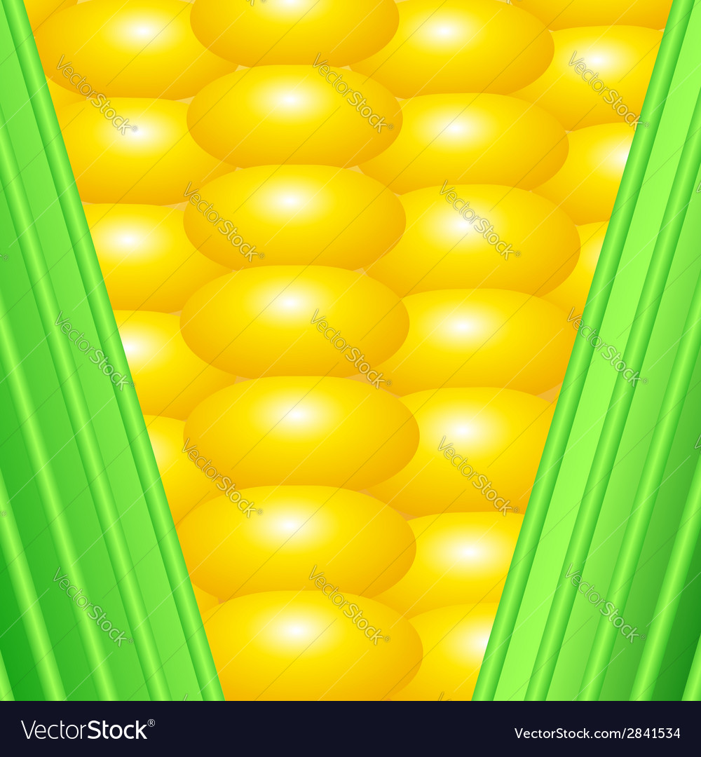 An earn of corn vector | Price: 1 Credit (USD $1)