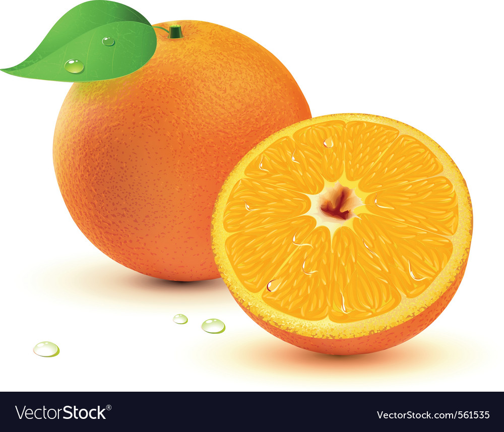 Juicy oranges vector | Price: 1 Credit (USD $1)