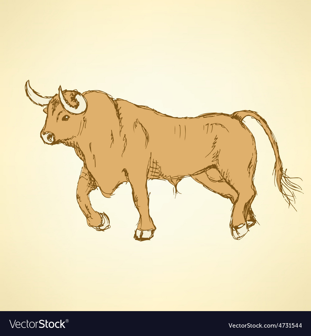 Sketch angry bull in vintage style vector | Price: 1 Credit (USD $1)