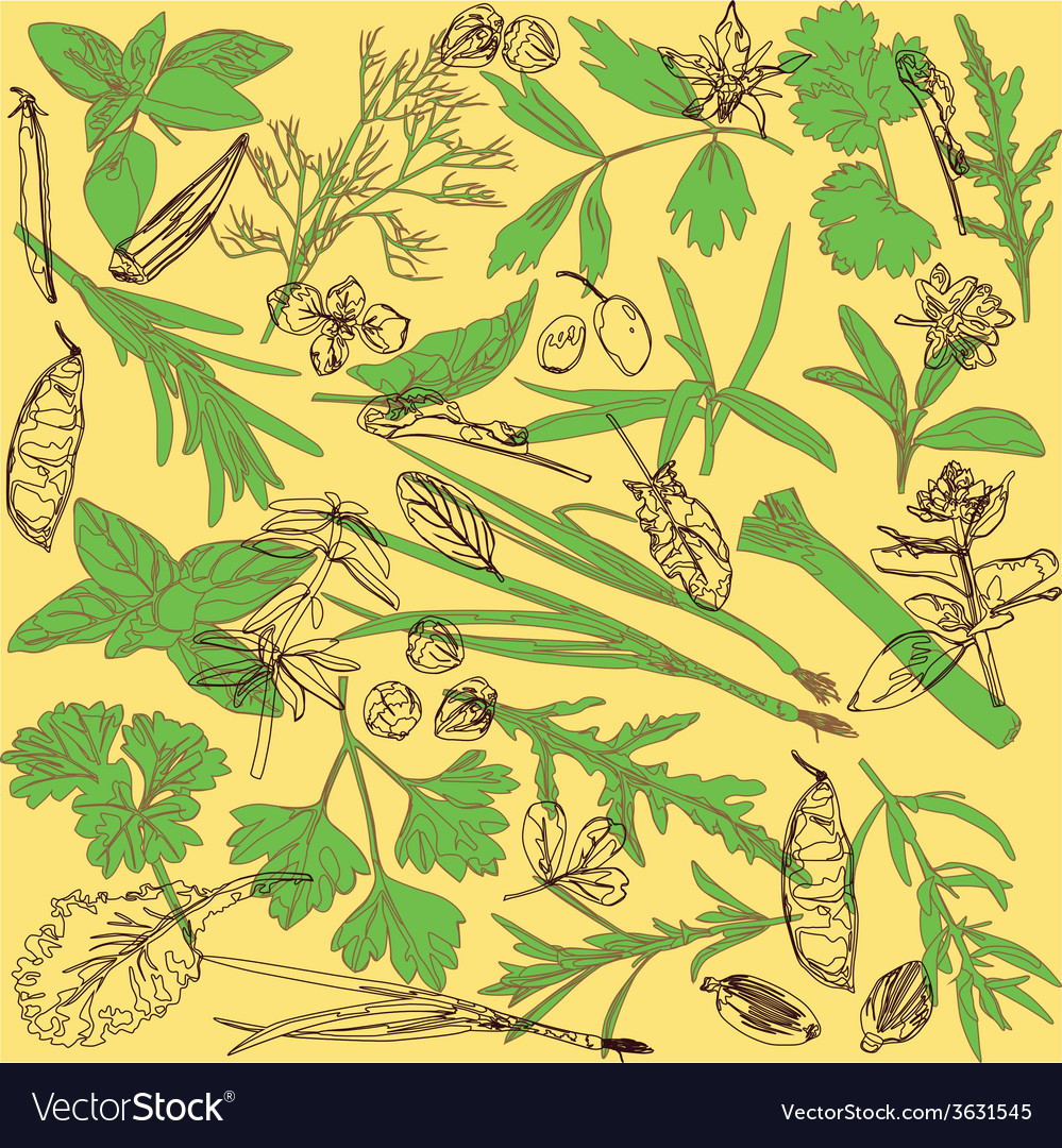Pattern with herbs vector | Price: 1 Credit (USD $1)
