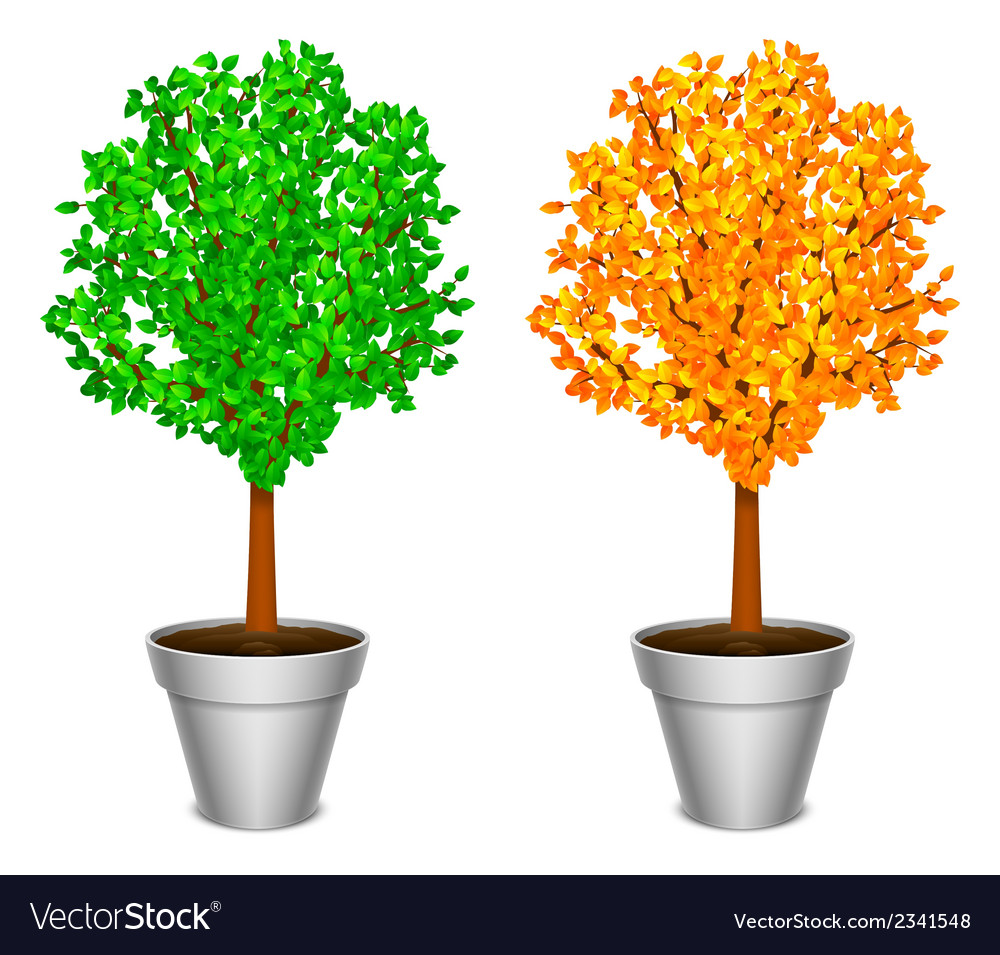 Tree in a pot vector | Price: 1 Credit (USD $1)