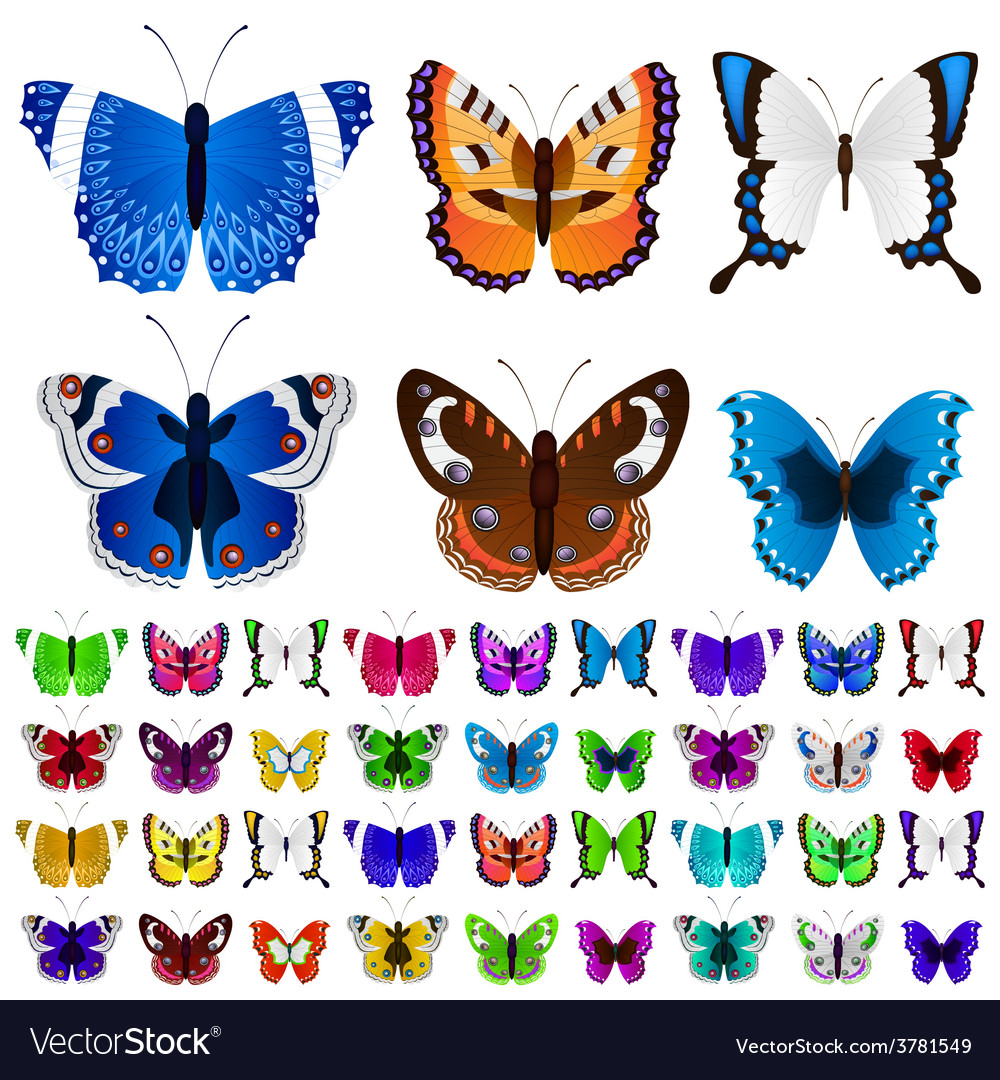 Set of colorful butterflies vector | Price: 1 Credit (USD $1)