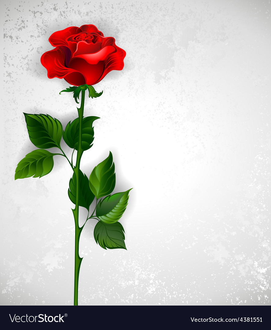 Straight red rose vector | Price: 3 Credit (USD $3)