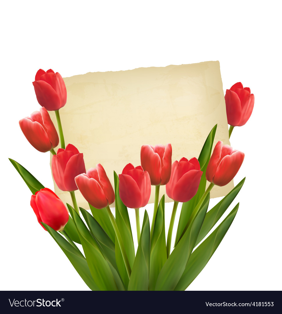 Red tulips with happy mothers day note vector | Price: 3 Credit (USD $3)