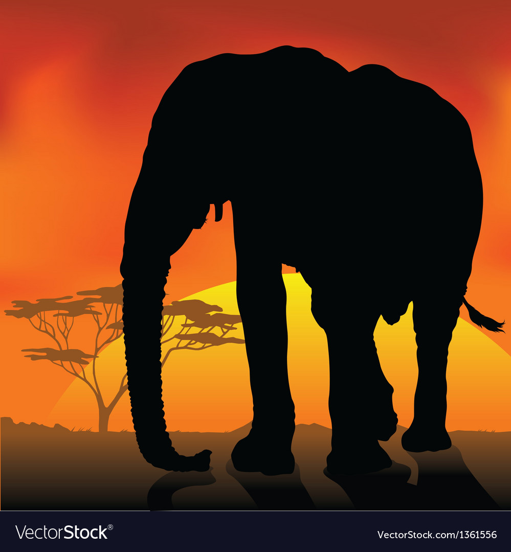 Elephant silhouette sunset vector | Price: 1 Credit (USD $1)