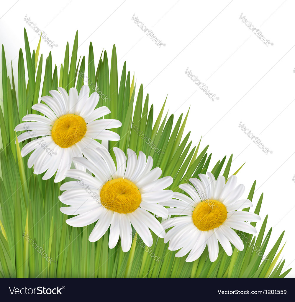 Nature background with beautiful flowers vector | Price: 3 Credit (USD $3)