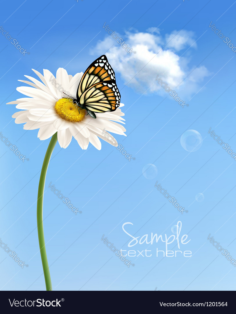 Nature spring daisy flower with butterfly vector | Price: 3 Credit (USD $3)