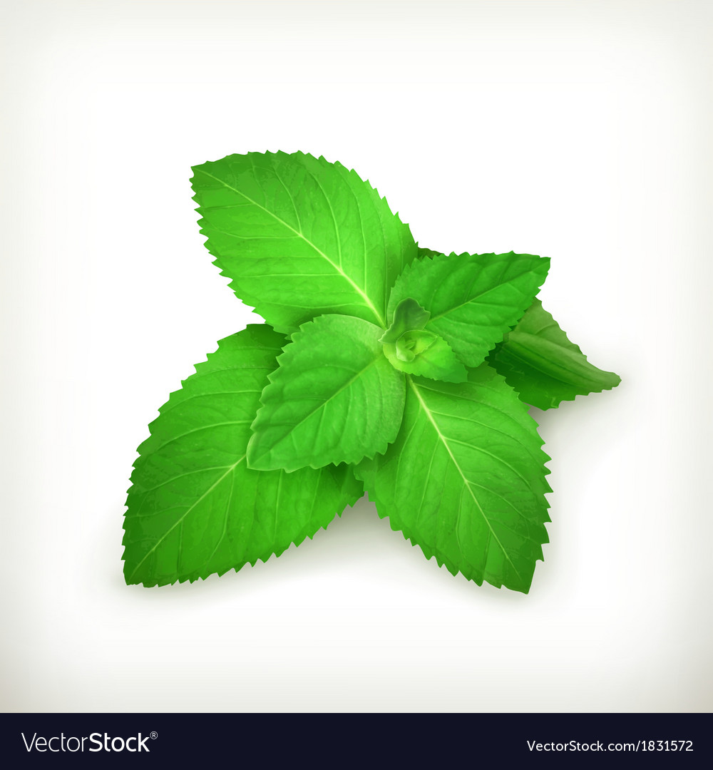 Fresh mint leaves vector | Price: 1 Credit (USD $1)