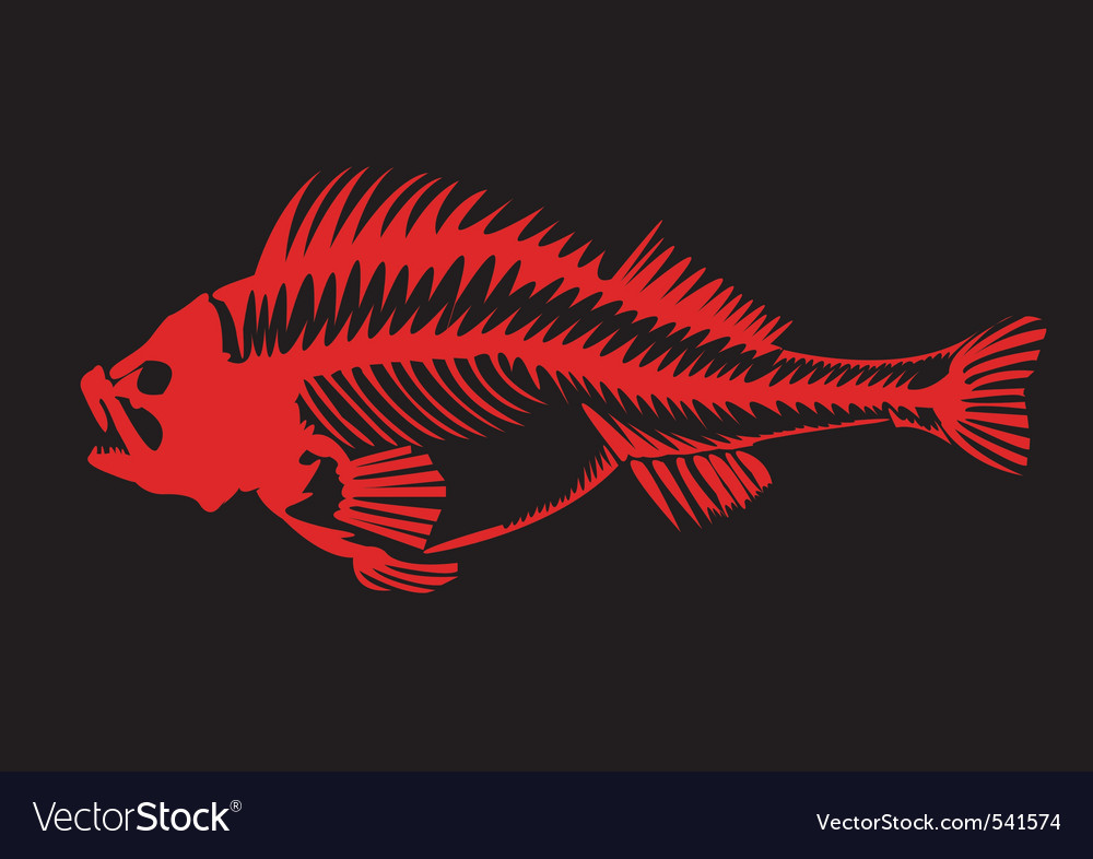 Skeleton of a fish vector | Price: 1 Credit (USD $1)