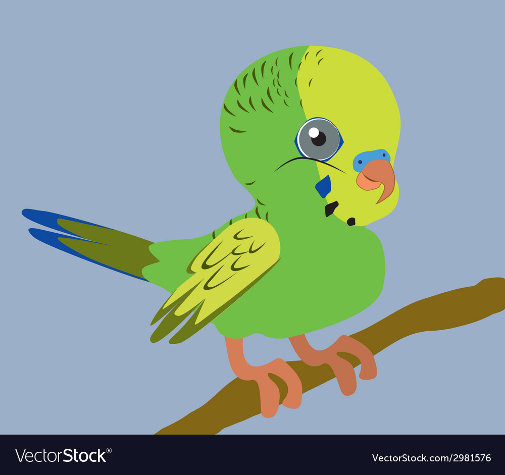 Budgie vector | Price: 1 Credit (USD $1)