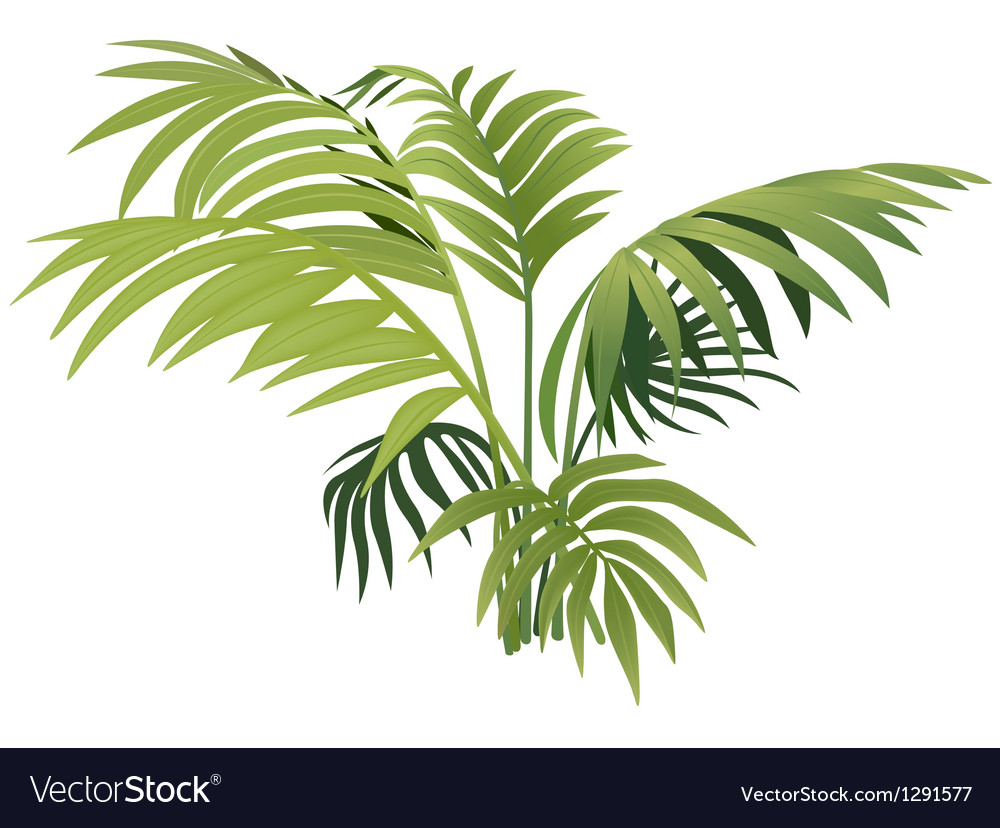 Fern plant vector | Price: 1 Credit (USD $1)