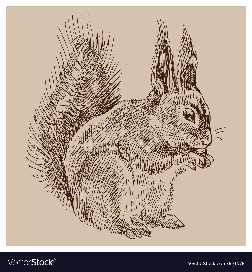 Vintage squirrel vector | Price: 1 Credit (USD $1)