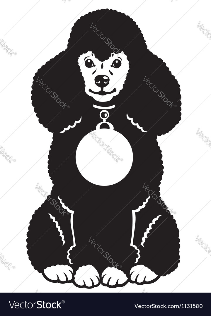 Black poodle vector | Price: 1 Credit (USD $1)