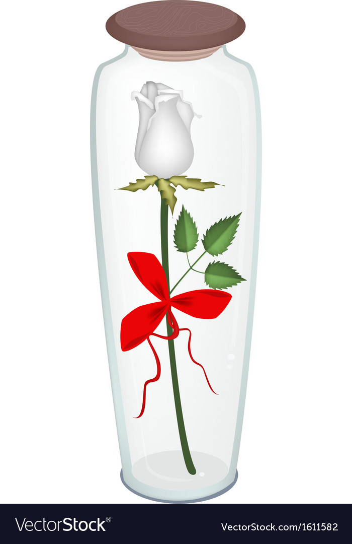 A white rose with red ribbon in glass bottle vector | Price: 1 Credit (USD $1)
