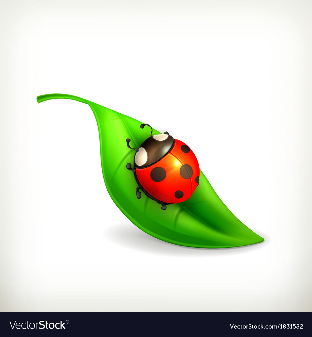 Ladybug on green leaf vector | Price: 1 Credit (USD $1)