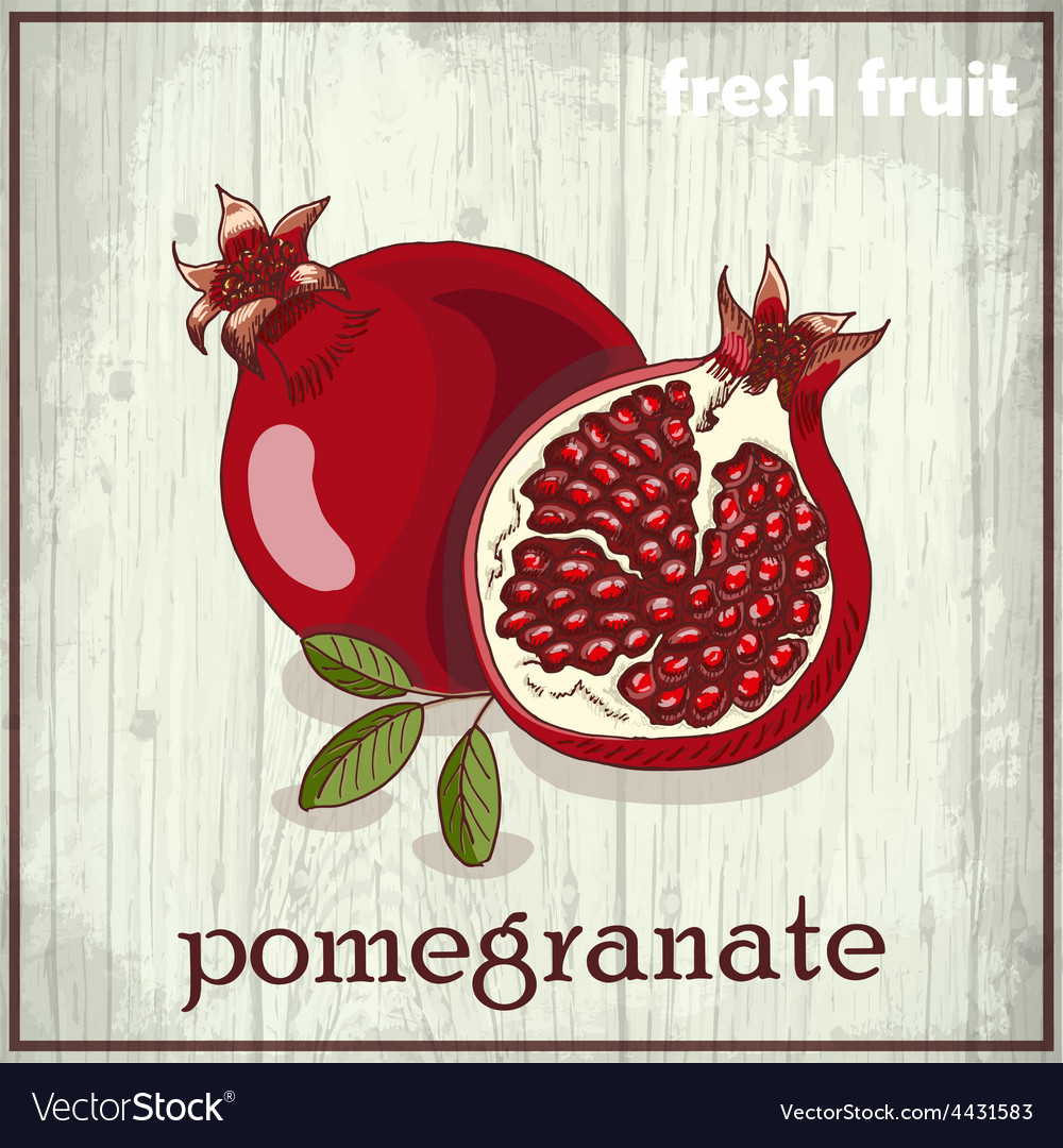 Hand drawing of pomegranate fresh fruit sketch vector | Price: 1 Credit (USD $1)
