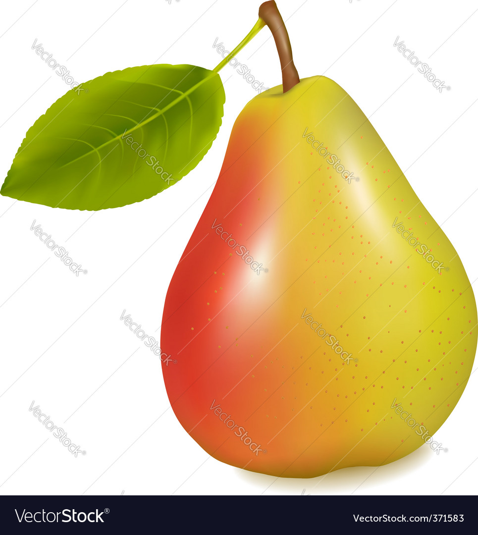 Pear with leaf vector | Price: 1 Credit (USD $1)