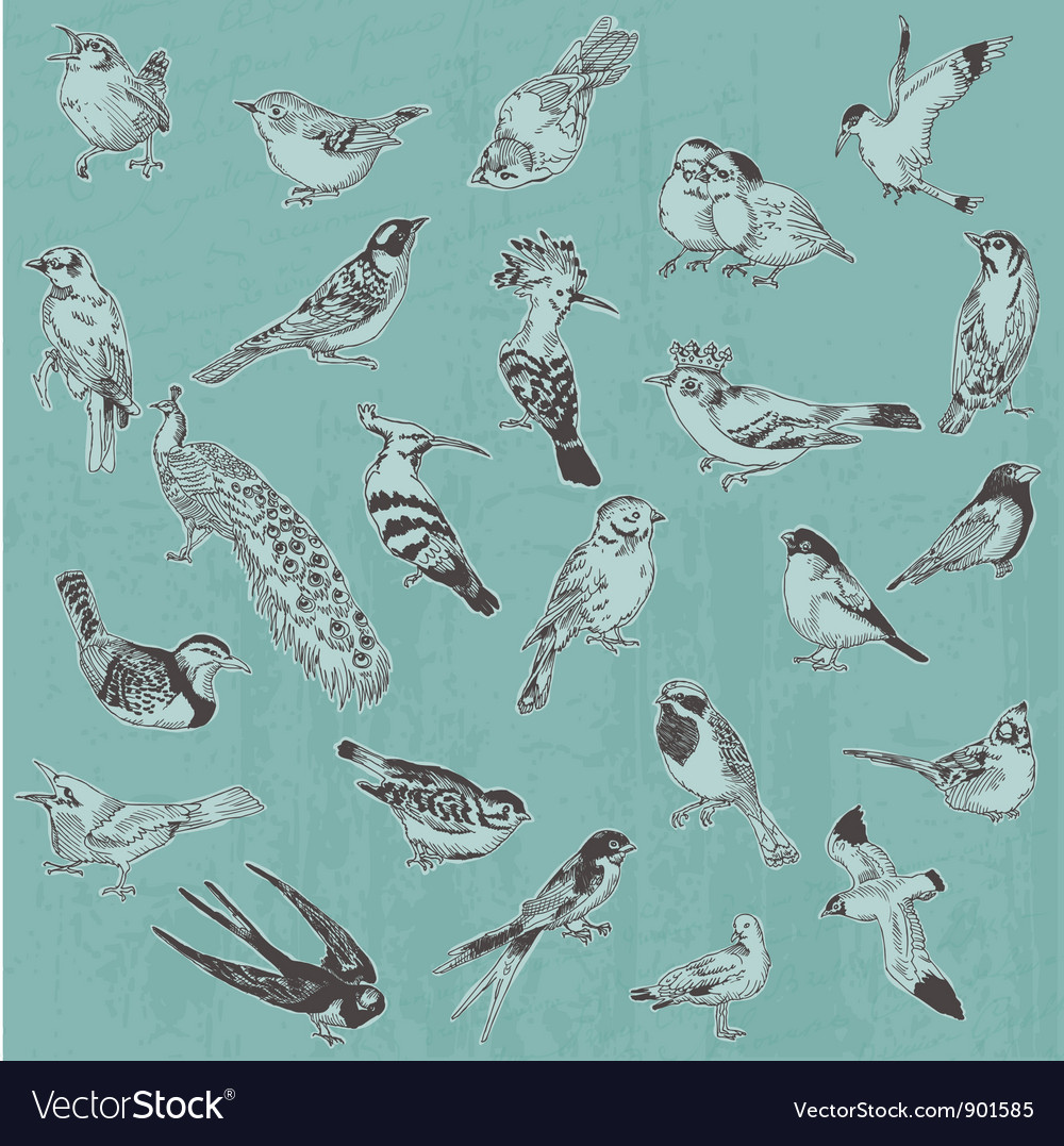Hand drawn birds vector | Price: 1 Credit (USD $1)