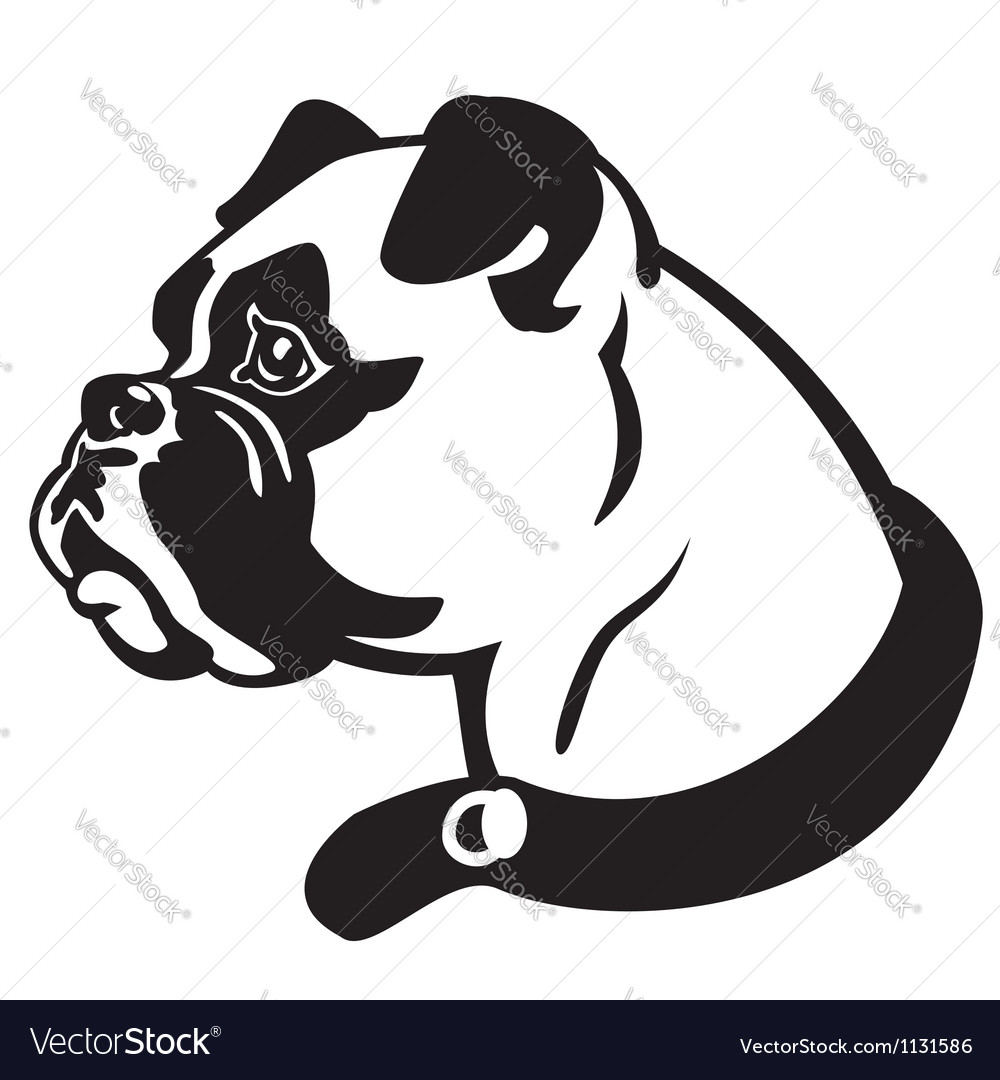 Boxer head black and white vector | Price: 1 Credit (USD $1)