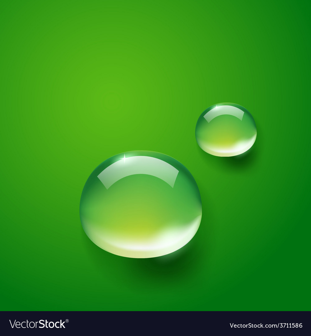 Water drop on green vector | Price: 1 Credit (USD $1)