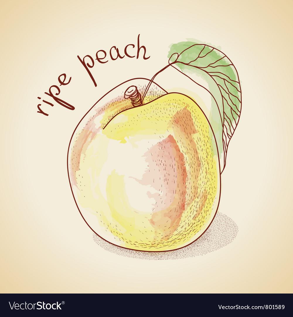 Vintage peach vector | Price: 1 Credit (USD $1)