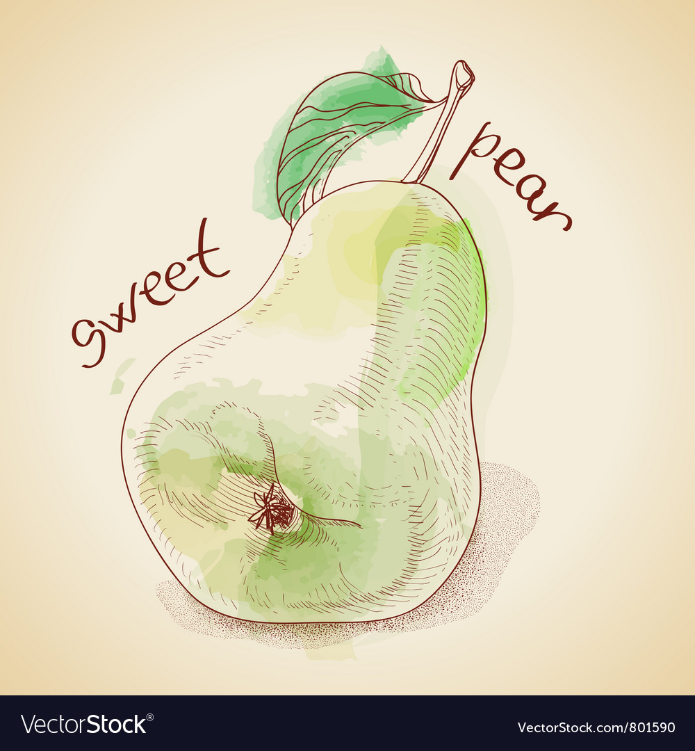 Vintage pear vector | Price: 1 Credit (USD $1)