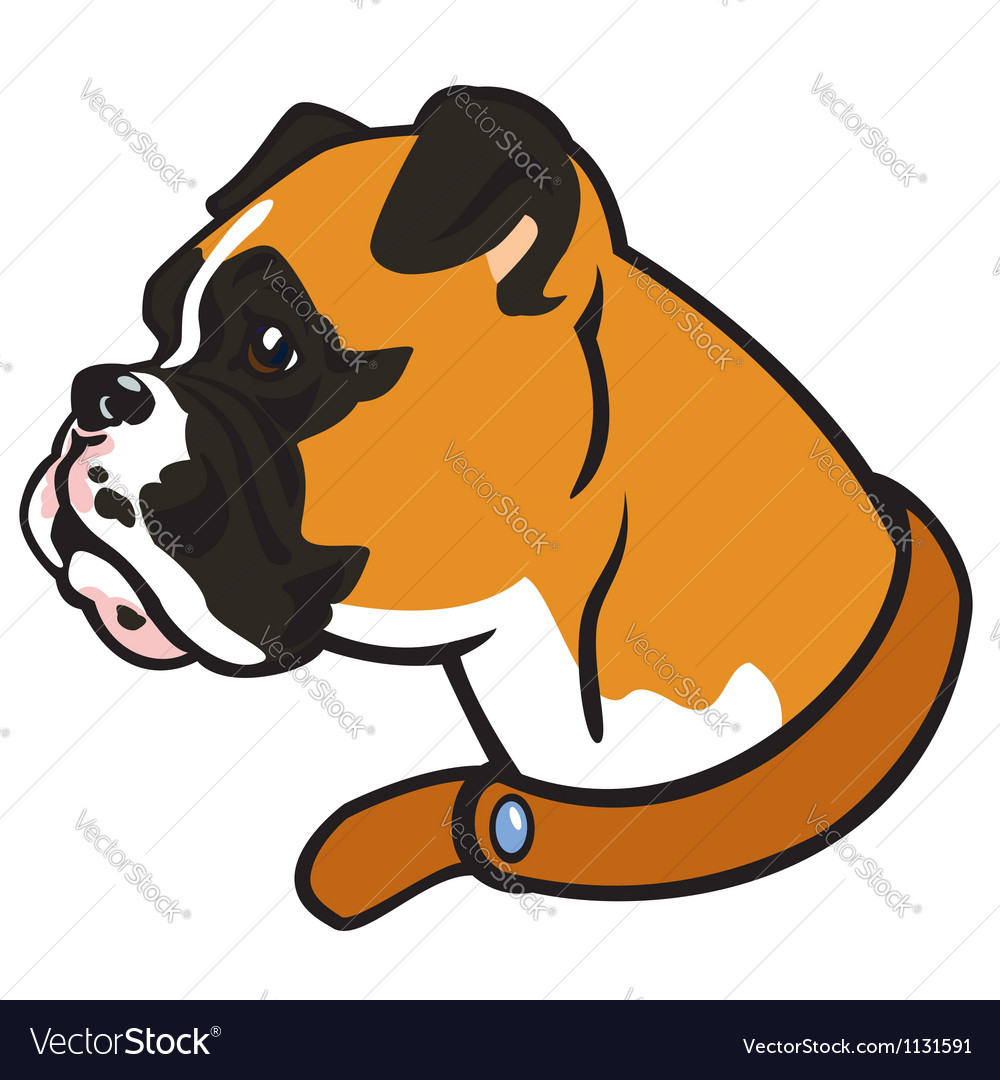 Boxer head vector | Price: 1 Credit (USD $1)