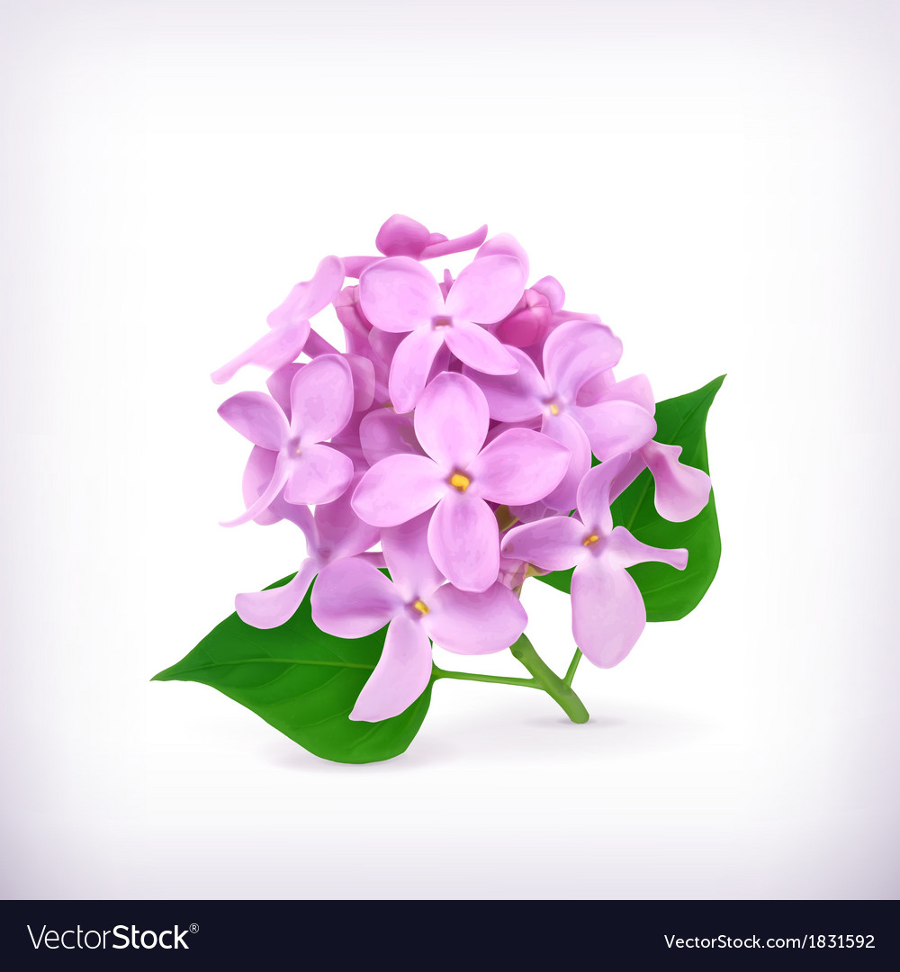 Lilac flowers vector | Price: 1 Credit (USD $1)