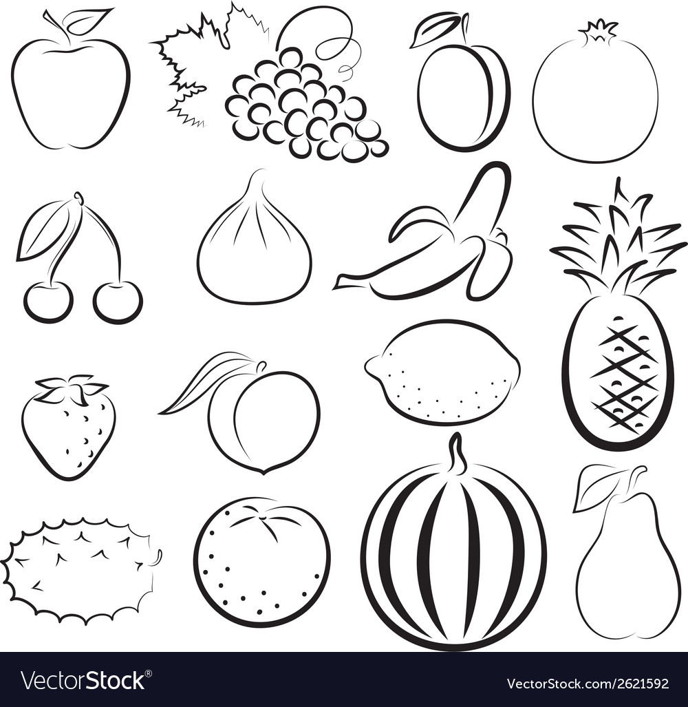 Sketch of different fruits vector | Price: 1 Credit (USD $1)