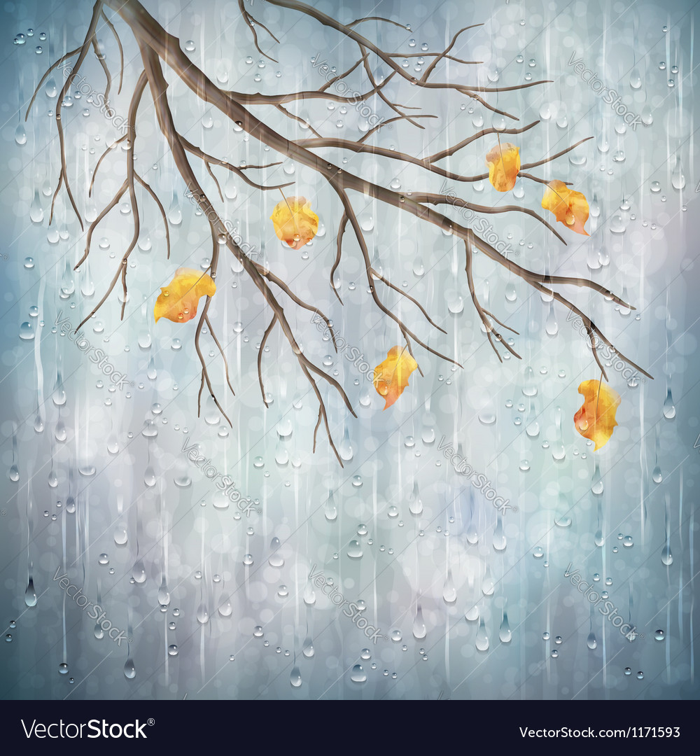 Autumn season rain weather tree branch design vector | Price: 3 Credit (USD $3)