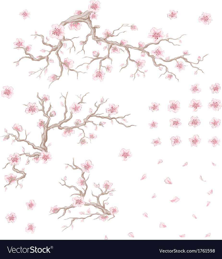 Bloom cherry branchs flowers and petals vector | Price: 1 Credit (USD $1)