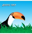 Exotic trip card vector