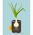Growing garlic with green leafy top in mug vector