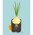 Growing onion with green leafy top in container vector