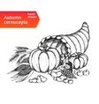 Cornucopia horn of plenty with autumn harvest vector