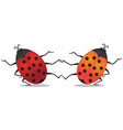 Dancing beetles vector