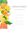 Background with citrus fruits seamless vertical vector