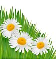 Nature background with beautiful flowers vector