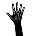 Hand xray vector