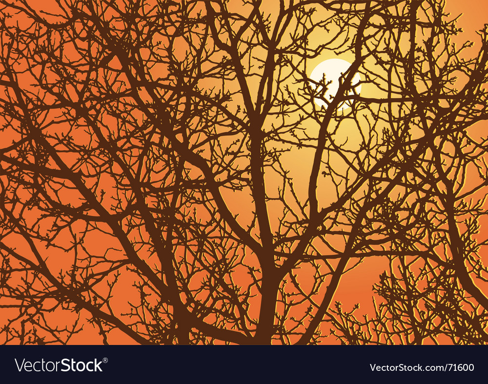 Branches sundown vector | Price: 1 Credit (USD $1)